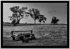 Lost in the background (agphoto100) Tags: hill tree trees grass figure woman plough metal fence mono monochrome orton minolta 7hi warwick countryside birds obscure light dark frame framed