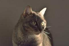 MIL_1007_HDR_1 (ansacariofoto) Tags: cat cats gatto gatti nikkor50 nikond7200