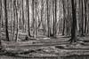 Columns (BlossomField) Tags: forest trees sassnitz mecklenburgvorpommern deutschland deu