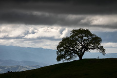 Spring Silhouette (Kirk Lougheed) Tags: california henrycoe henrycoestatepark henrywcoestatepark santaclaracounty santacruzmountains usa unitedstates cloud landscape outdoor park silhouette sky statepark tree spring
