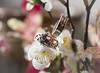 Anells (teresa.calbo) Tags: anell anillos macro
