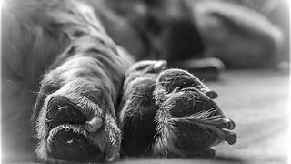 Boo's Paws