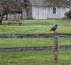 The Raven & The Bench-HBM (Jo Zimny Photos) Tags: benchmonday bench raven fence yard front garage country upstateny ithaca fingerlakes