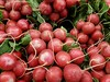 Redness for salad! (canadianlookin) Tags: radish red vegetable round