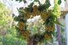 Ψίνθος (Psinthos.Net) Tags: ψίνθοσ psinthos mayday πρωτομαγιά μάιοσ μάησ άνοιξη may spring afternoon απόγευμα απόγευμαάνοιξησ ανοιξιάτικοαπόγευμα άγριαλουλούδια λουλούδια αγριολούλουδα κίτριναλουλούδια κιτρινάκια yellowflowers wildflowers flowers wreath στεφάνι μαγιάτικοστεφάνι ροδόσταμο rosewater φύση nature vrisi vrisiarea vrisipsinthos psinthosvalley valley κοιλάδα κοιλάδαψίνθου κοιλάδαψίνθοσ βρύση βρύσηψίνθου βρύσηψίνθοσ περιοχήβρύση πλάτανοσ πλατάνοι πλάτανοι πλατάνια planetrees planetree treebranches κλαδιάδέντρων δέντρα trees leaves φύλλα πρασινάδα greenery sunlight light φώσ φώσήλιου φώσηλίου γύρη pollen