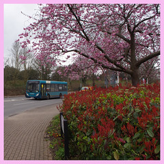IMGP8778 (Steve Guess) Tags: brooklands byfleet surrey england gb uk bus arriva dennis alexander enviro 200 route436 gn57bny