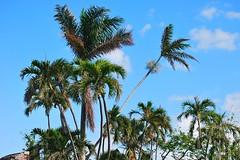 Key West (Florida) Trip 2017 0239Rif 4x6 (edgarandron - Busy!) Tags: florida keys floridakeys keywest higgsbeach