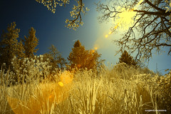 Sunny days - infrared - HSS! (JSB PHOTOGRAPHS) Tags: dsc572800001 copy infrared skinnerbutte sunday sunny nikon d70 grass trees sky sunburst 1870mm eugene oregon 720nm infraredconvertedcamera sliderssunday hss