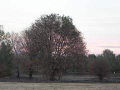 DSCN9853 (Gianluigi Roda / Photographer) Tags: bologna summer latesummer 2012 landscapes skies clouds trees sunset