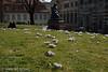 Frühling in Dresden (binax25) Tags: dresden spring frühling krokus crocus flowers blumen natur stadt brühlsche terasse