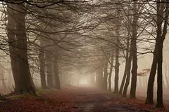 Alone (peeteninge) Tags: alone forest wood trees mist fog nature bomen bos natuur fujifilmxt2 fujifilm