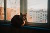 Тихон/Surprised cat (Esha Yaz) Tags: видысъемки портрет дом погода кот эмоции окно времясуток пасмурно времягода день строения весна животные место балкон удивление