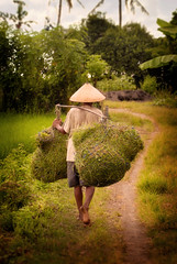 Balinese Field Worker (EdBob) Tags: bali balinese worker ricefield tabanan texture textured indonesia food asia asian southeastasia man working walking carry carrying conical hat path travel barefoot edmundlowephotography edmundlowe allmyphotographsare©copyrightedandallrightsreservednoneofthesephotosmaybereproducedandorusedinanyformofpublicationprintortheinternetwithoutmywrittenpermission