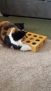 Puzzle toy #9