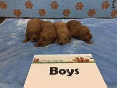 Dakota Boys 4-15