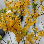 Freitagsblütchen thumbnail