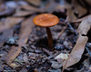 The Beauty Found On the Forest Floor (that_damn_duck) Tags: nikon nature forestfloor forest mushroom leaves fungus toadstool