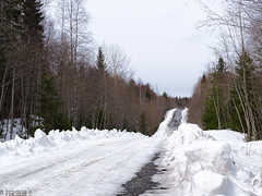 Forest road (PershinS) Tags: 7dfw landscapes forest road spring karelia olympus snow white