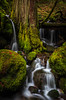 North Fork Watersed (Eric DeBord) Tags: moss nw nature water northwest northforkwilamettewatershed canon 6d creek oregon waterfall forest temperaterainforest willamettenationalforest cascademountains naturallight wilderness canontse24mmf35lii