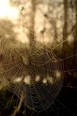 Spider's trap (smcnally24601) Tags: web spider england english britain british morning dawn dew river mole betchworth spring