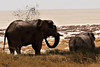 Namibia's Beauty: cooling down in Etosha (ronmcbride66) Tags: elephants etosha saltpan namibia desert mud water namibiasbeauty wildlife coth5