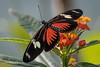 Schmetterling / butterfly (Stefan Schlegel Photography) Tags: sony schmetterling butterflie burgerszoo arnheim sony77ii