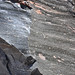 Rhyodacite vitrophyre (Llao Rock Rhyodacite, Holocene, ~7.8-7.9 ka; roadcut near Llao Rock, margin of Crater Lake Caldera, Oregon, USA) 56