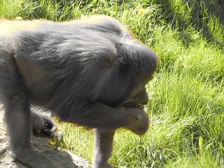 Leipzig Zoo / Orang-Utans