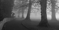 A Walk in the Park (J_Q_H) Tags: john leigh park altrincham canon powershot g7x mk ii mark 2 mist trees person dog