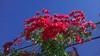 Ramallah - beautiful November weather (and flowers!)