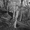 trees (rotabaga) Tags: sverige sweden svartvitt göteborg gothenburg johanneberg lomo lomography lubitel166 fomapan r09 blackandwhite bw bwfp twinlens mediumformat mellanformat 120 6x6
