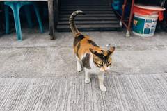 Cat. (t-a-i) Tags: 28mm a7rii a7rmkii a7r2 cat hk hkg hongkong ilce7rm2 sony sonya7rii sonyilce7rm2 sonyα7rii taio α7rii newterritories