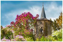Saison des lilas (Pascale_seg) Tags: landscape paysage église clocher lilas fleurs flowers tree sky printemps spring moselle lorraine france nikon chapelle rodemack village
