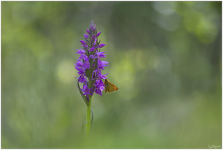 _MG_7212_con farfalla