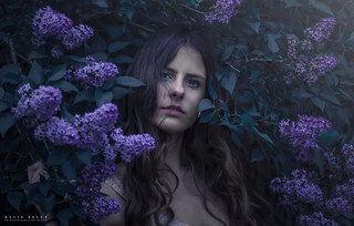 The lilacs and her III