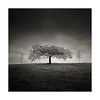 |    ¥    | (Nick green2012) Tags: infrared trees silence blackandwhite square minimalist