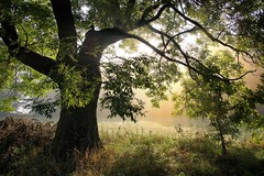 *** (pszcz9) Tags: polska poland przyroda nature natura drzewo tree poranek morning jesień autumn fall beautifulearth sony a77 mgła fog mist