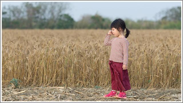 3月台南 親子寫真可以這樣拍 木棉花 蜀葵 小麥 一次讓你拍個夠 (22)