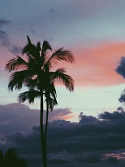 Follow me on Instagram🌴: giulia_cetto (alessandrocetto) Tags: catchy relaxing view amazing beautiful green white clouds vegetation plant tree nature landscape vacation holiday trip travel pic photo sunrise sunset red blue pink sky sand beach ocean tropical exotic la california island palms