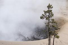 Life and Death (ChadBarry) Tags: landscape minimalist minimal contrast sand steam life wyoming geothermal geysers geyser yellowstone