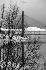 28032018_Kåfjord (Andrés Gallego) Tags: nikon noruega norway blancoynegro bw blackwhite d750 2470 2470mm bridge puente fiords fiord fiordo fiordos arbol arboles tree ice snow hielo nieve montañas mountains mountain
