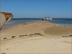 My idea of freedom ... (Armelle85) Tags: extérieur nature paysage mer océan eau plage sable oiseau bateau