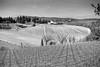 before spring arrives (drzoidbergh) Tags: toskana sancascianoinvaldipesa toscana italien it blackandwhite landscape vineyard rural