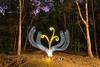 Light Planting VI (stephenk1977) Tags: australia queensland qld brisbane nikon d3300 light painting art photography plant whip brushes pen yellow white alderley banksstreetreserve night