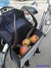 Gazelle (Mattijsje) Tags: gazelle horns hoorns horens gewei fiets fietstas bike bag funny strange weird apples appels appel raar vreemd bagage luggage