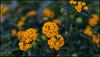 _SG_2018_04_0087_IMG_6813 (_SG_) Tags: usa us florida key west sunshine state united states america island city roundtrip edison ford winter estates historical museum botanical garden thomas alva henry fort meyers caloosahatchee river