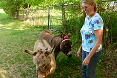 Dragon Fly Farm Donkeys 20180502 20180501  DSC_3063 Deborah Happy Birthday (Shane's Flying Disc Show) Tags: donkeys catdragonflyfarm