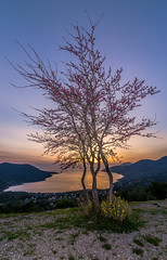 Spring sunset (Vagelis Pikoulas) Tags: spring sun sunset flash trees tree porto germeno greece march 2018 tokina landscape sea seascape nature colour colors view canon 6d 1628mm
