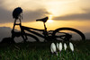 Kroküsse (Joachim S.) Tags: bern switzerland ch krokus sonnenuntergang bike blumen margel margelsattel