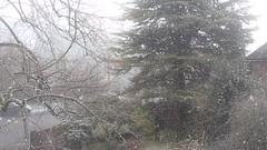 Unseasonal snowfall in Salisbury (Elmar Eye) Tags: salisbury snow garden